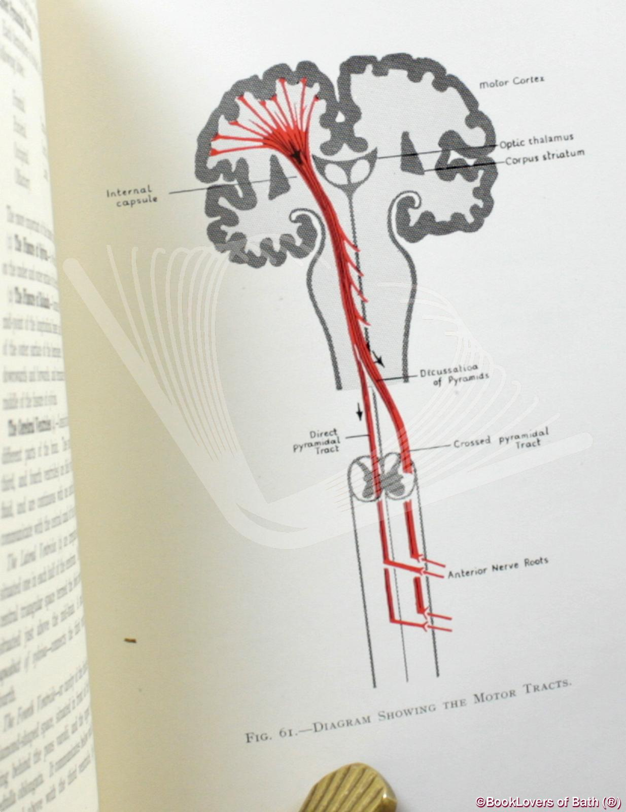 A Guide to Anatomy: For Students of Medical Gymnastics, Massage a